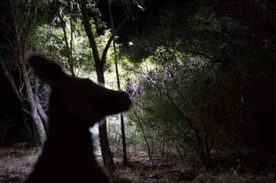 waterborne-kangaroo-silhouette-1024x682