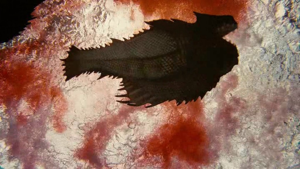 """Image du film """"Piranha 3D 2"""""""